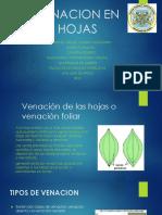 VENACION EN HOJAS-1.pptx