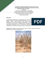 Palo Santo (bursera graveolens).pdf