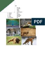 Animales en Maya y Kiche en Español
