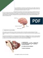 CEREBELO resumen.pdf