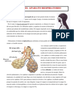 Tema 6.- Sistema Respiratorio