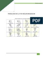 378111734-Fenologia-de-La-Vid-Segun-Baggiolini.docx