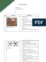 Filum Echinodermata