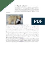 oso peligro de extinción