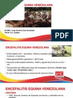 ENCEFALITIS EQUINA 2