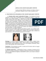 II patologia b.doc