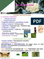 10. Hortalizas (18)2017-I.ppt