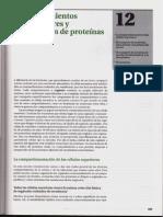 Sistemas de endomembranas Nucleo y Reticulo Endoplasmico.pdf