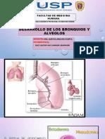2 Desarrollo de Los Broonquios y Alveolos Jeanpieer Ruiz