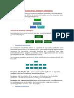 Clasificación de Los Receptores Colinérgicos
