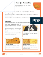 Pet Care of a Guinea Pig Differentiated