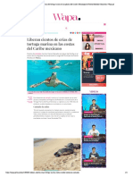 Liberan crías de tortuga marina...de Puerto Morelos