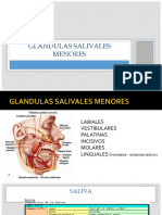 GLANDULAS SALIVALES MENORES.pptx