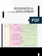 Embryogenesis Fetal Development