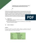 INFORME RABANO AGRONOMIA.docx