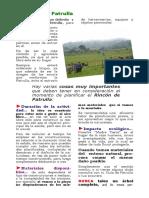 5_rincon_patrulla.pdf