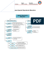 Mapa Conceptual - Aparato Reproductor Masculino y Femenino.docx