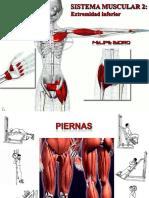 muscular_inferior.pdf