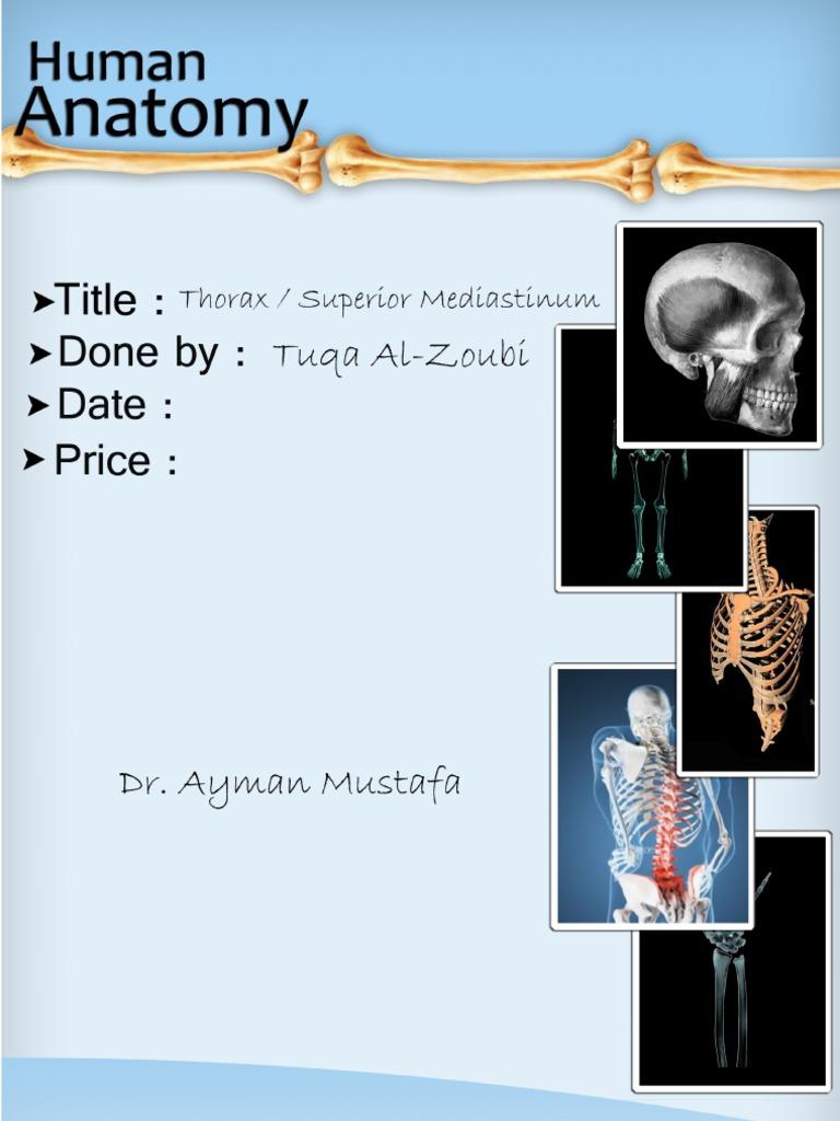 Anatomy, Lecture 7, Thorax & Superior Mediastinum (Lecture NOtes ...