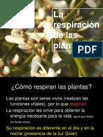 La Respiracion en Plantas y Animales