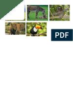 6 Animalesde La Selva