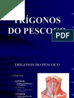138998226-Pescoco-trigonos