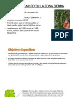 Informe de Visita a La Zona Sierra