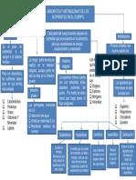 mapa conceptual evidencia 1.pptx