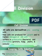 cellcyclecelldivision-110213145759-phpapp02