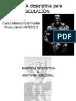 libro-anatomia.pdf