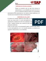 resumenes_sindromes.docx