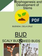 Chapter 6 Botany