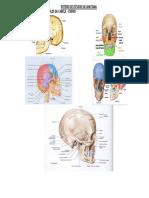 Roteiro de estudos para Anatomia