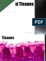animal_tissues.pdf