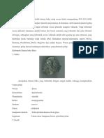 Batuan Beku Basa.docx