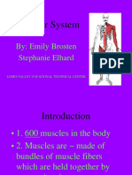 muscular-system.ppt
