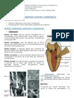 13. Dentinogénesis Normal y Patológica
