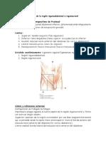 Anatomía Topográfica de La Región Inguinoabdominal e Inguinocrural Importante Resumen