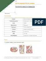 ab7. protocolo_adrenales