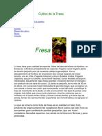 Cultivo de La Fresa