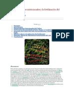 Requerimientos nutricionales y la fertilización del cultivo del café.docx