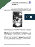 gerdau.pdf