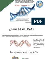 Estructura Del Dna (1)