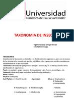 Taxonomia insectos