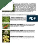 Ejercicio de Clases Recolección de Plantas