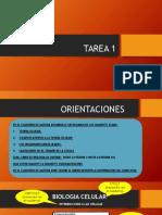 TAREA 1 (BGU A-B-C-D).pptx