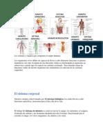 Los Sistemas y Órganos Que Componen El Cuerpo Humano