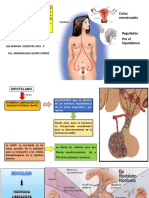 Fisiologia Aparato Reproductor Femenino