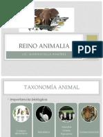 Reino Animalia Taxonomia SEM4