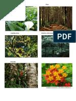 Flora y Fauna de Montecristo
